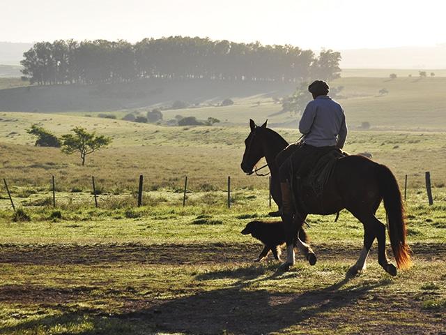 Gaucho e seu cusco a caminho da lida campeira (Zizo Asnis)