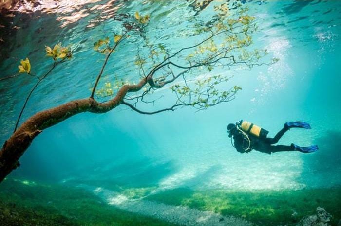 Diver in Magic Kingdom   Foto por Marc Henauer