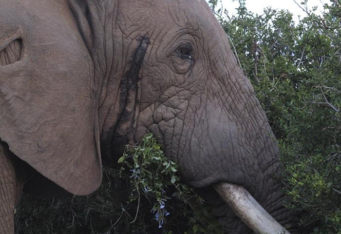 Addo Elephant National Park | Foto por Ana Lucia Mendes Antonio