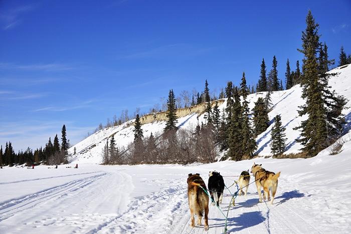 passeio de trenó puxado por cachorros (dog sledding)   Foto por Livia Auler