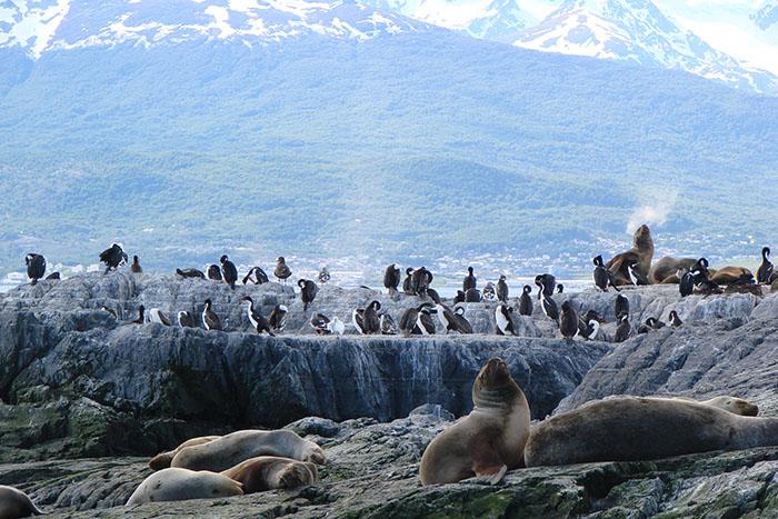 A incrível fauna de Ushuaia | Foto arquivo O Viajante