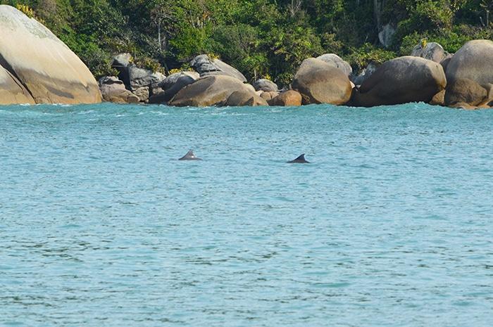 Golfinhos na Praia da Tainha | Foto por Grazi Calasans