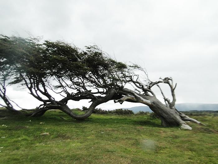 Árvores distorcidas pelo vento | Foto por Sabrina Levensteinas