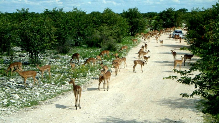 Parque Nacional Etosha | Foto por Felipe Bauermann