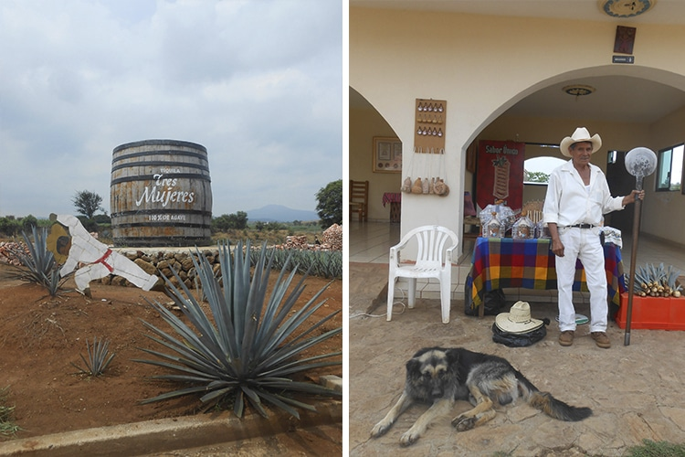 Entrada da destilaria Tres Mujeres e Rafa, o simpático jimador, e seu cachorro companheiro | Fotos por Renata Ferri