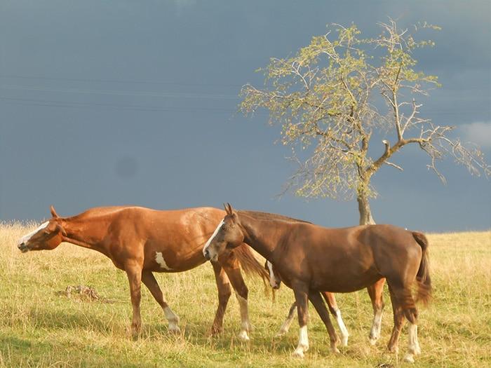 Lindos cavalos pastando em Epiquerez   Foto por Grazi Calazans