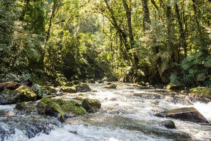 Rio Ouro Fino no Parque do Zizo