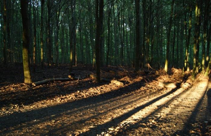 Risskov: belíssimas paisagens que também garantem boas fotos | Foto por Vinícius Fontana