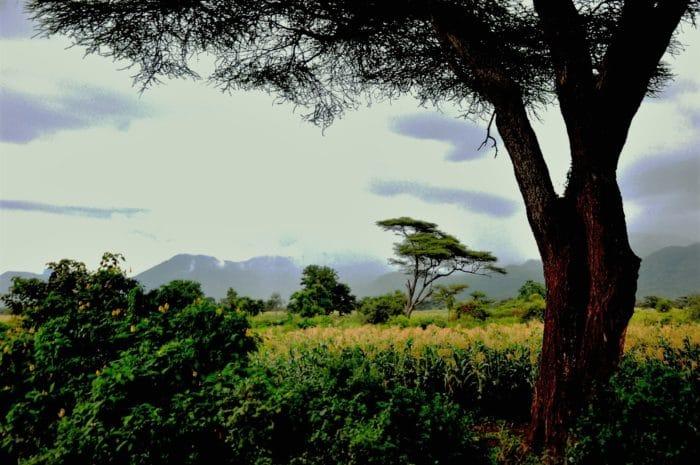 2. vegetacao africana