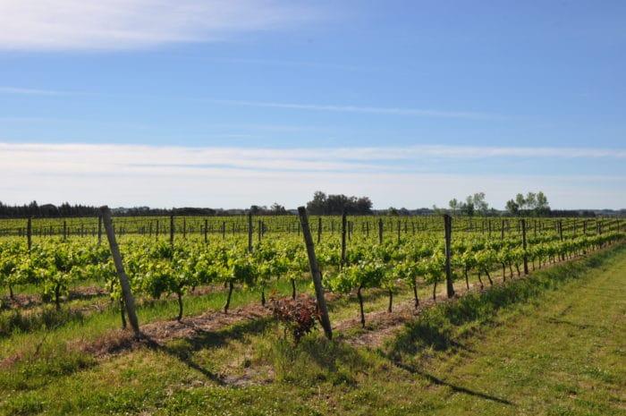 Parreiras da Juanicó, uma das principais vinícolas do Uruguai   Zizo Asnis