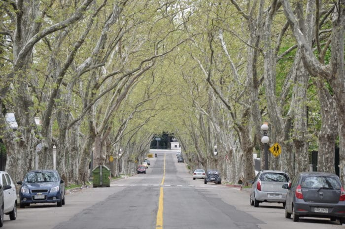 As tranquilas e arborizadas ruas do Prado | Zizo Asnis