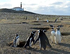 destaque-pinguins-isla-magdalena