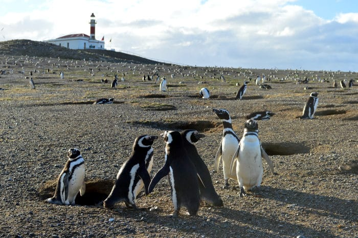 Recepção calorosa na chegada à ilha | Beto Lisboa